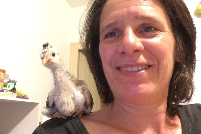 A baby chick sitting on a woman's shoulder