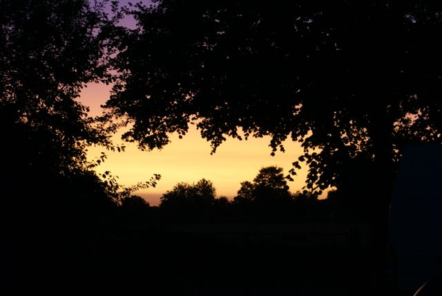 Dark trees and yellow sunset